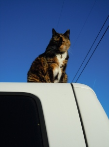 Cat of the Road